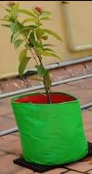 15*15 inch grow bag